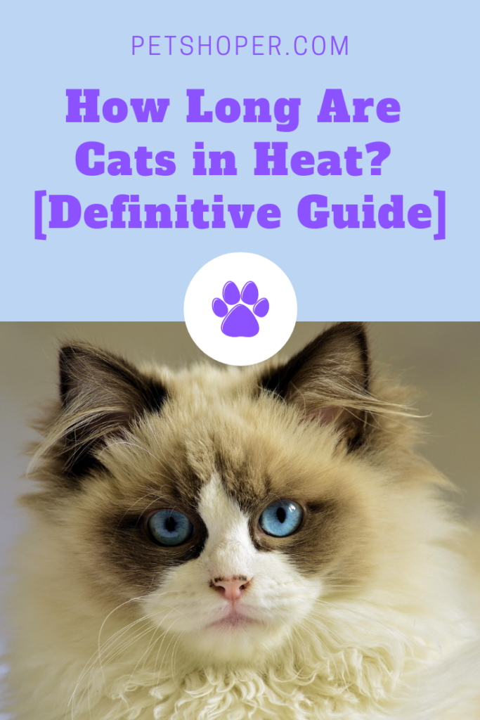 How Long Are Cats in Heat? [A Definitive Guide]