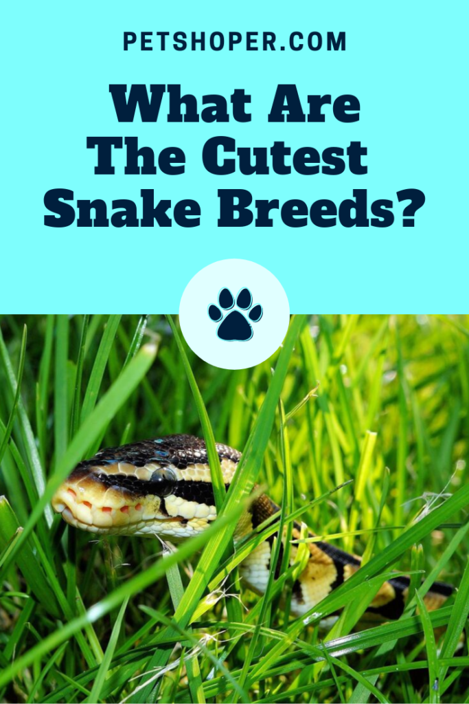 What Are The Cutest Snake Breeds pin