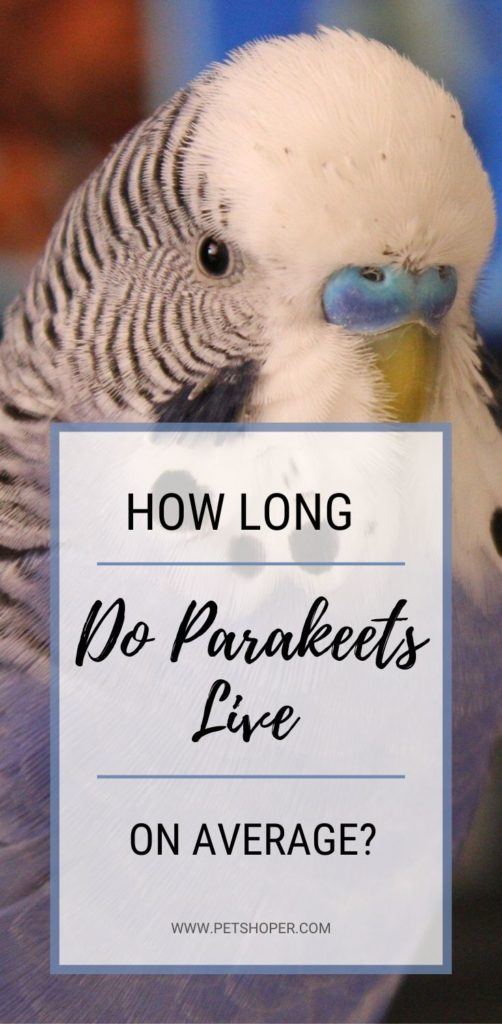 How Long Do Parakeets Live on Average pin