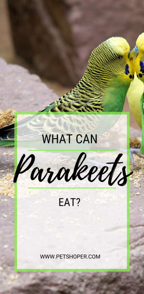 what can parakeets eat pin