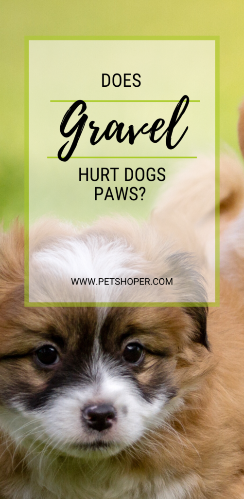 Does Gravel Hurt Dogs Paws pin