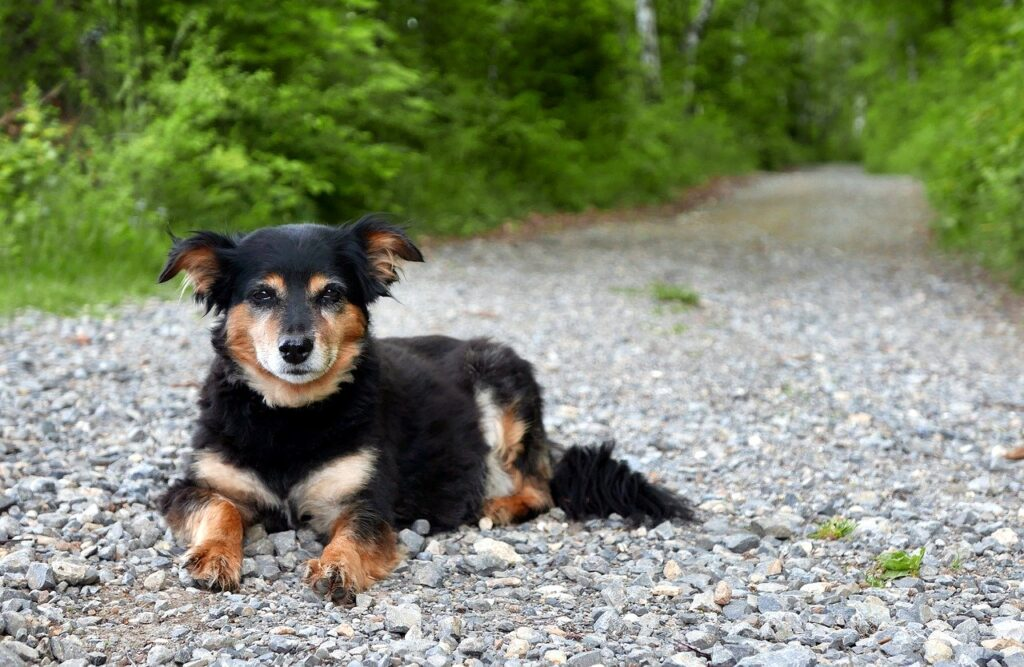 What Is The Best Gravel For A Dog Run