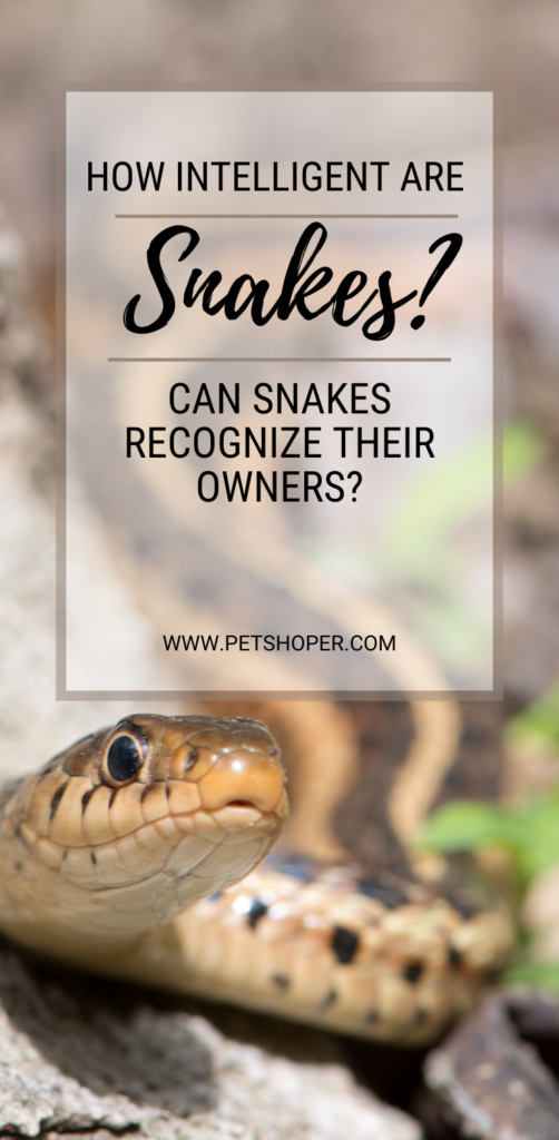How Intelligent Are Snakes pin