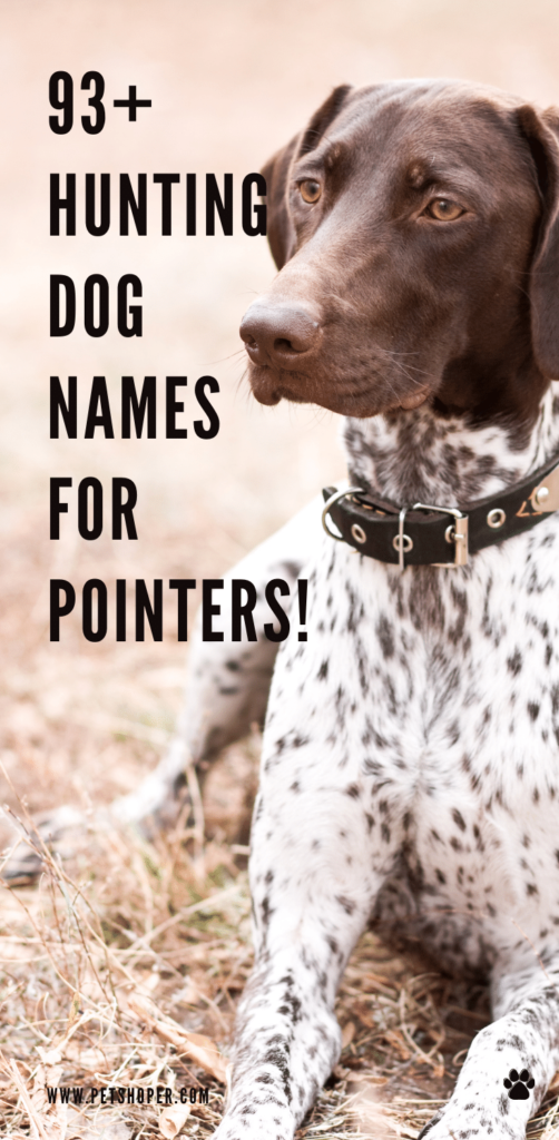 Hunting Dog Names For Pointers pin