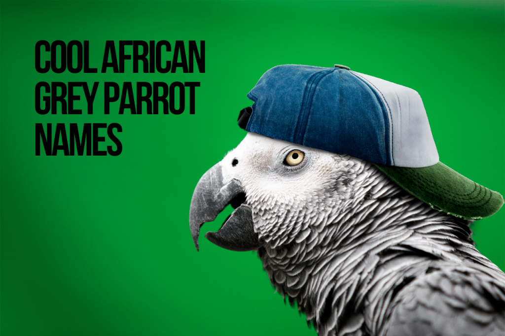Cool African Grey Parrot Names