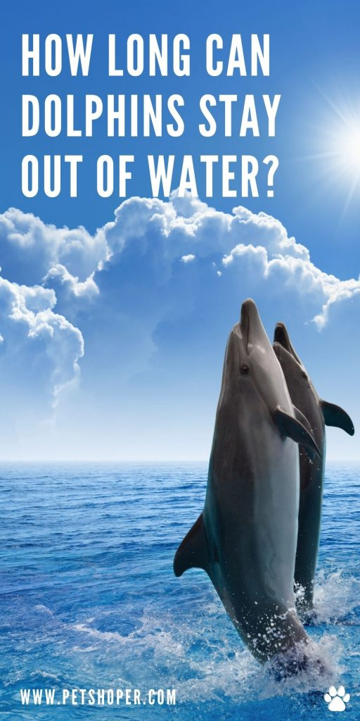 How Long Can Dolphins Stay Out of Water pin