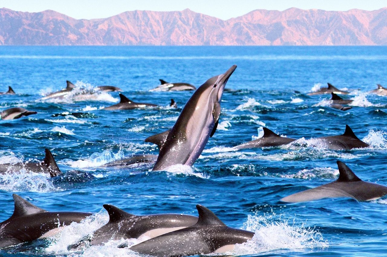 How Long Can Dolphins Stay Out of Water